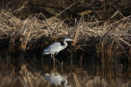 Animal, River, Waterside, Waterweed, Bird, Wild Birds