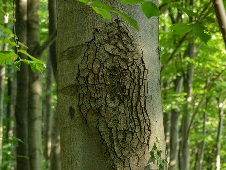Log, Bark, Nature, Forest