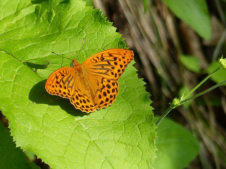 Nature, Butterfly, Outdoors, Insect, Leaf