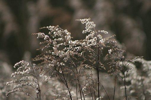 Nature, Season, Plant, Golden Rod, Winter