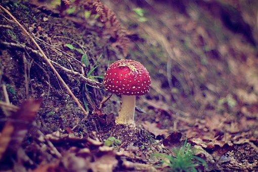 Fungus, Nature, Mushroom, Outdoors, Wood