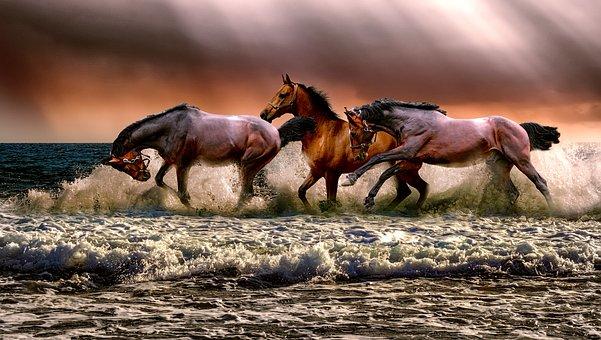 Animal, Horses, Fauna, Nature, Cavalry, Sea