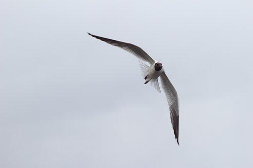 Bird, Living Nature, Nature, Flight, Seagull, Sky