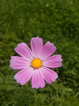 Nature, Summer, Flowers, Plants, Vivid, Outdoors