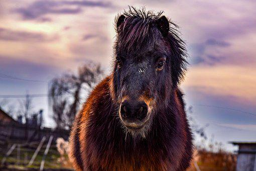 Pony, Sunset, Landscape, Nature, Love, Colors