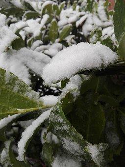 Winter, Tree, Nature, Outdoors, Snow, Natuur