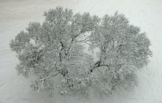Winter, Tree, Snow, Frost, Slovakia, Nature
