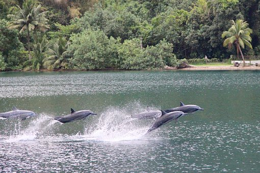 Waters, Nature, Summer, Travel, Tropical, Dolphins
