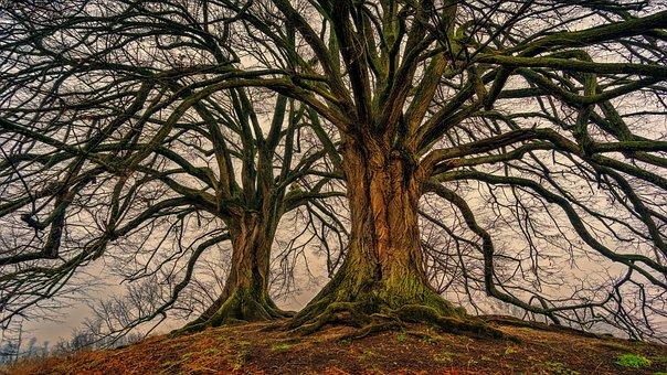 Tree, Nature, Wood, Winter, Kahl, Log, Tribe, Aesthetic