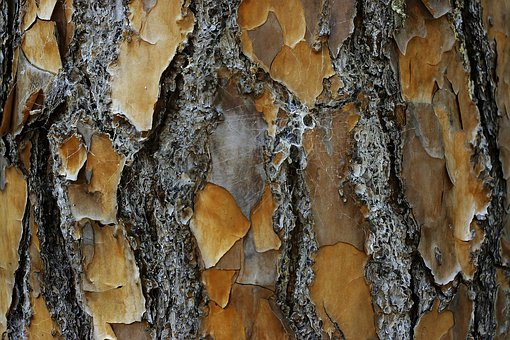 Tree, Desktop, Nature, Bark, Pattern, Closeup, Wood