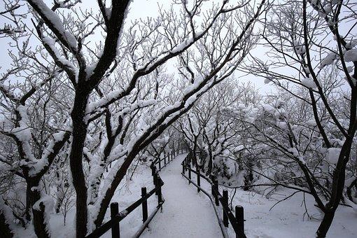 Winter, Wood, Snow