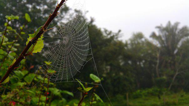 Web, Cobweb, Design, Nature, Outdoors, Flora, Leaf