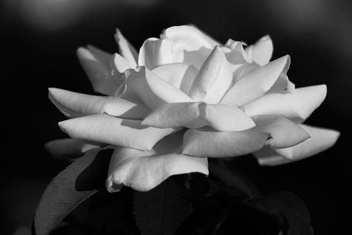 Nature, Flora, Flower, Leaf, Beautiful, Desktop, Petal