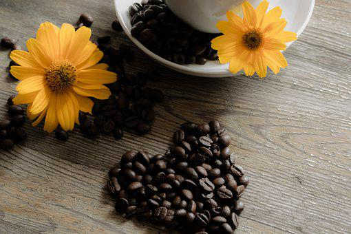 Flower, Plant, The Drink, Aromatic, Color, Coffee