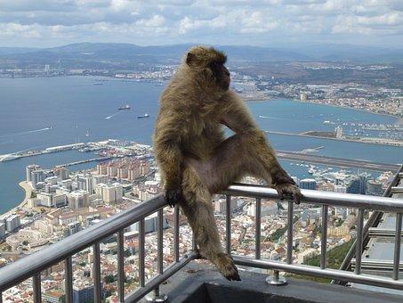 Travel, Nature, Open Air, Sky, Mono, Gibraltar, Fauna