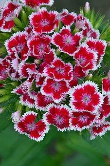 Flower, Nature, Plant, Floral, Garden, Color, Lively