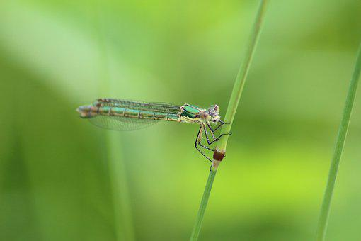 Insect, Dragonfly, Nature, Animals, Living Nature