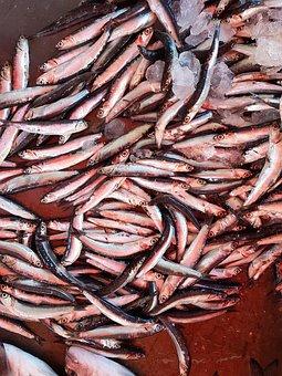 Fish, Food, Seafood, Market, Eat, Market Stall, Cook