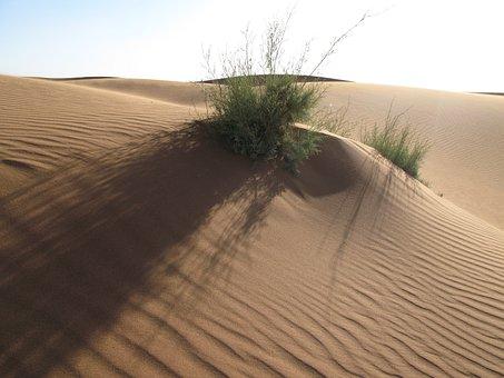 Sand, Desert, Dry, Landscape, Dune, Grass, Morocco