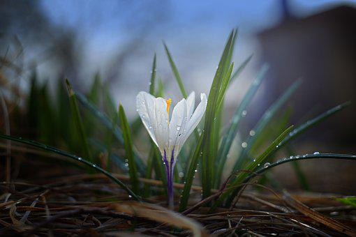 Nature, Plant, Outdoors, Flower, Sheet, Leaves, Garden