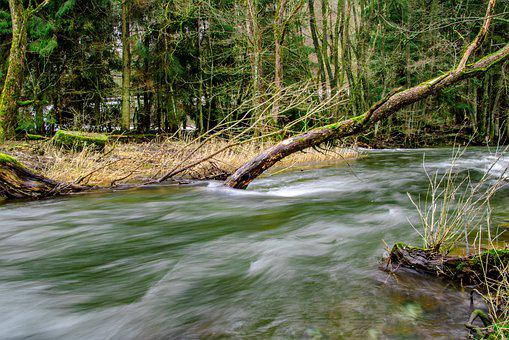 Waters, River, Nature, Tree, Bank, Forest, Grasses, Log
