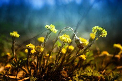 Nature, Flower, Plant, Grass, Haymaking, Landscape