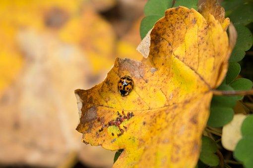 Nature, Leaf, Plant, Autumn, Season, Insect, Small