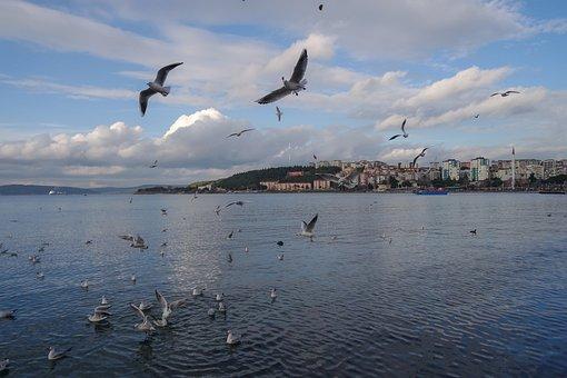 Body Of Water, Birds, Marine, Nature, Sky, Beach, Blue