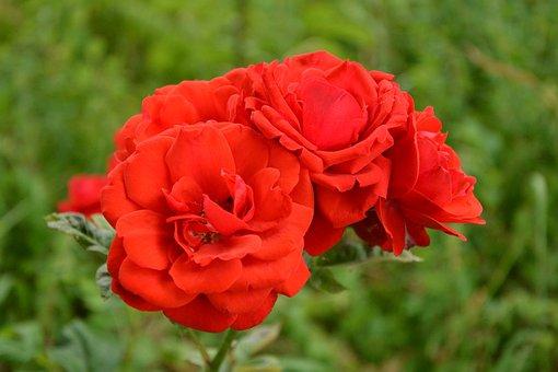 Flower, Nature, Plant, Summer, Floral, Petal, Garden