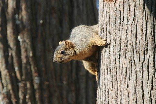 Wood, Nature, Wildlife, Mammal, Tree, Outdoors