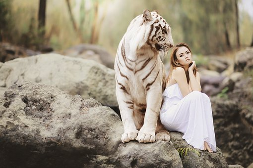Nature, Animal World, White Bengal Tiger, Males, Tiger
