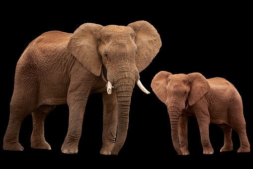 Elephant, Animal, Animals, Africa, Family Of Elephants