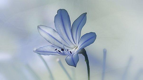 Nature, Flower, Flora, Summer, Leaf, Beautiful, Bright