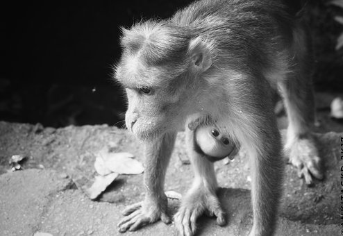 Portrait, Mammal, Sit, Nature, Monochrome, Monkey, Cute