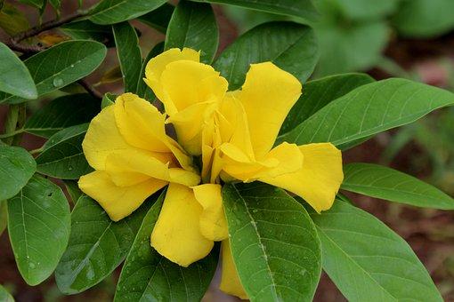 Leaf, Nature, Flora, Flower, Garden, Yellow Flower