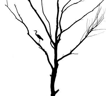 Tree, Dead Tree, Bird, Heron, Gray Heron, Silhouette