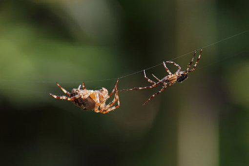 Spider, Insect, A Spider-like Insect, Bespozvonochnoe