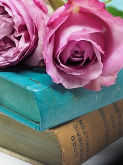 Flower, Rose, Love, Romance, Still Life, Petal