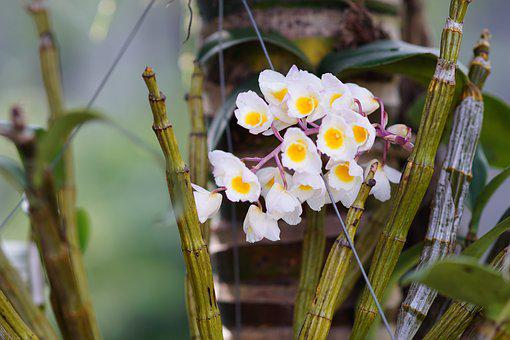 Orchids, Flower, Nice