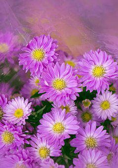 Natural, Heather, Purple Flowers, Background Images