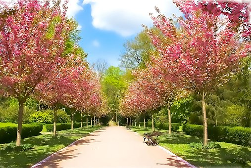 Tree, Park, Season, Flower, Nature, Garden, Plant