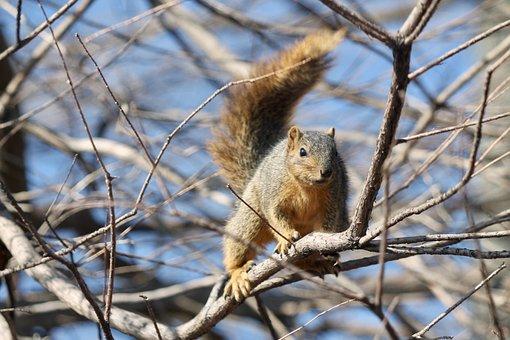 Tree, Nature, Mammal, Wildlife, Outdoors, Squirrel