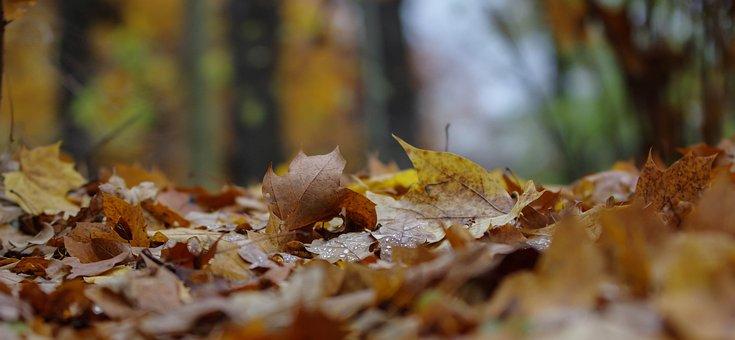 Autumn, Leaf, Nature, Wood, Season, Close, Horizontal