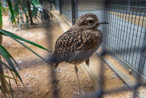 Bird, Animal World, Nature, Animal, Zoo