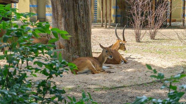 Nature, Animal, Wood, Tree, Mammal, Animal World, Wild