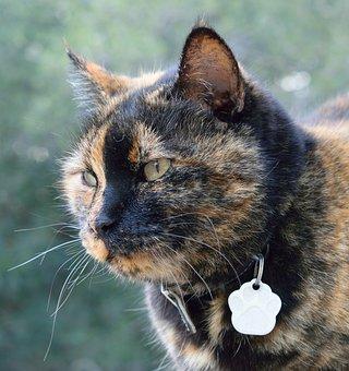 Cat, Animalia, Mammalia, Nice, Kitten