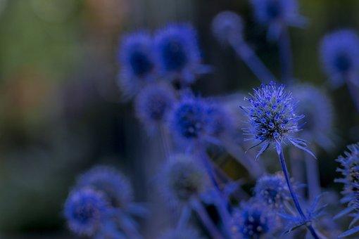 Nature, Flower, Plant, Summer, Garden, Color, Flowers