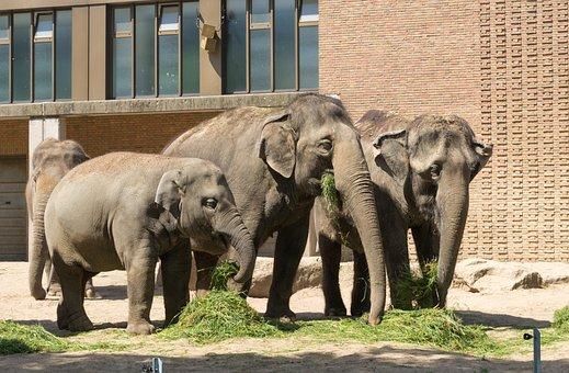Elephant, Mammal, Animal, Animal World, Nature, Zoo