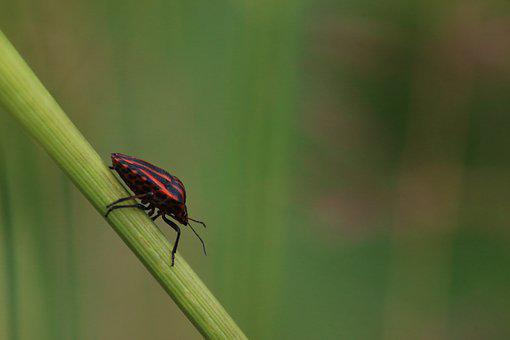 No One, Insect, Nature, Outdoors, Beetle, Bug