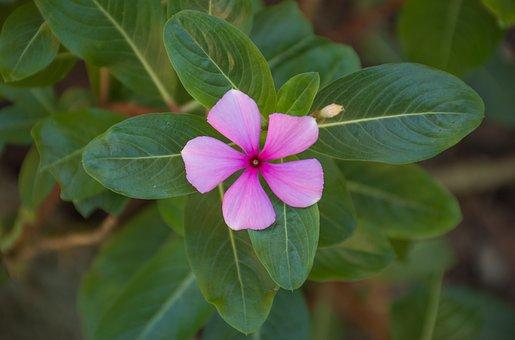Nature, Plant, Leaf, Flower, Approach, Garden, Summer